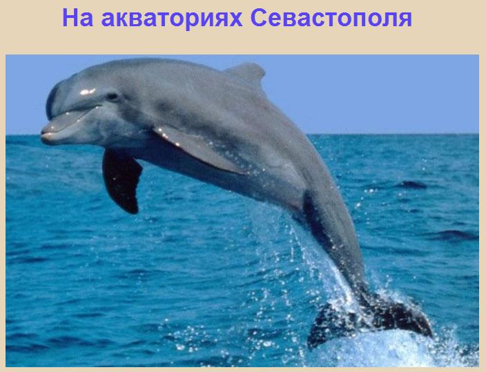 большой дельфин